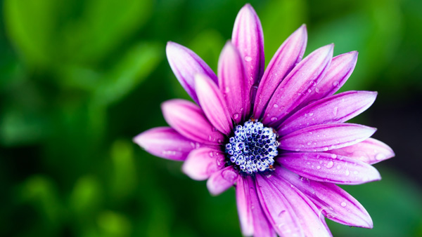 Nature & Floral Hd wallpaper|Theme Windows 7/8