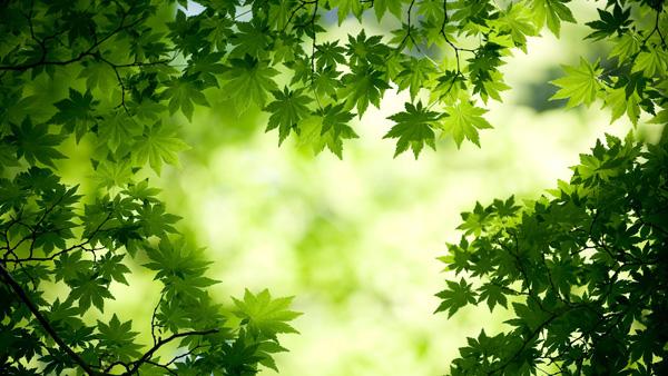 Nature & Floral Hd wallpaper Theme Windows 7/8
